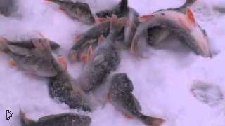 Смотреть онлайн Зимняя рыбалка на балду