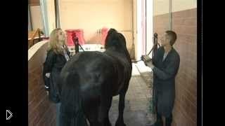 Смотреть онлайн Правильное содержание и уход за лошадью