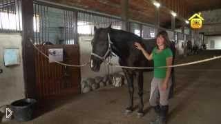 Смотреть онлайн Содержание и кормление лошади в домашних условиях
