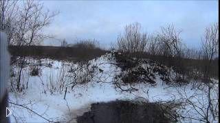 Смотреть онлайн Охота на бобра зимой с ружьем в России