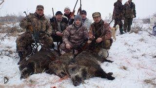 Смотреть онлайн Охота на кабана зимой с лайками 2014 года