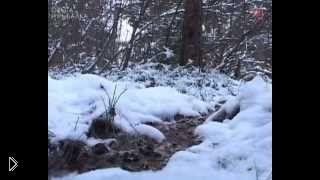 Смотреть онлайн Охота на лису и зайца с гончими и с подхода зимой