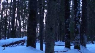 Смотреть онлайн Охота на рябчика с манком зимой
