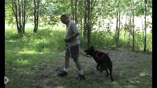 Смотреть онлайн Курс дрессировки послушания для собак
