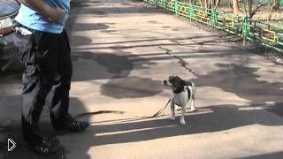 Смотреть онлайн Как отучить собаку тянуть поводок