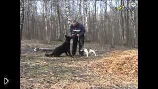 Смотреть онлайн Как подавить и убрать агрессию у собаки к другим собакам