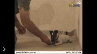 Смотреть онлайн Как отучить щенка кусаться