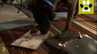 Смотреть онлайн Как отучить собаку грызть вещи, мебель, обувь