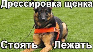 Смотреть онлайн Как обучить собаку выполнять команду «Стоять-лежать»