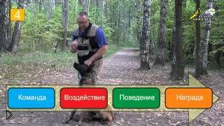 Смотреть онлайн Как научить собаку выполнять команду «Рядом»