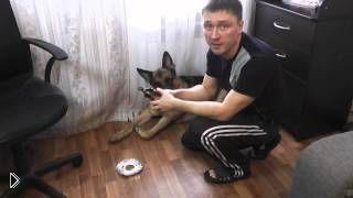 Смотреть онлайн Как правильно приучить собаку стричь когти