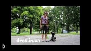 Смотреть онлайн Как отучить собаку прыгать на людей и хозяина