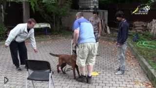 Как отучить пса подбегать к чужим людям - Видео онлайн