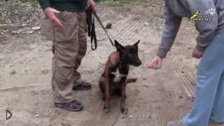 Смотреть онлайн Дрессировка собак: как отучить щенка брать еду у чужих