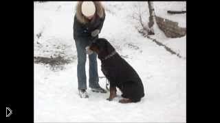 Обучение собак: как научить команде «Нельзя» - Видео онлайн