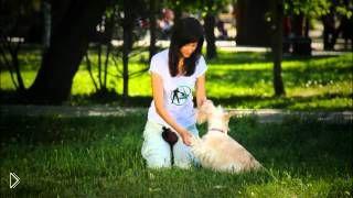 Смотреть онлайн Обучение собак: как научить по команде давать лапу