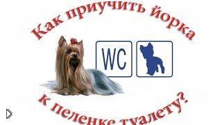 Смотреть онлайн Как приучить щенка мелких пород к туалету дома