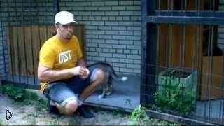 Смотреть онлайн Как приучить щенка к домашнему вольеру