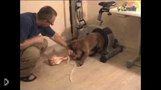 Смотреть онлайн Как отучить щенка рычать и кусаться, когда он ест