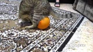 Смотреть онлайн Воздушный шарик приклеился к коту