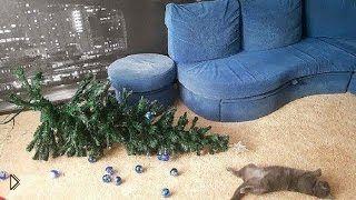Смотреть онлайн Подборка: Коты роняют новогодние елки