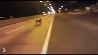 Смотреть онлайн Телепортация: появление пса из неоткуда