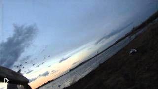 Весенняя охота на белого гуся с подсадной в Канаде - Видео онлайн