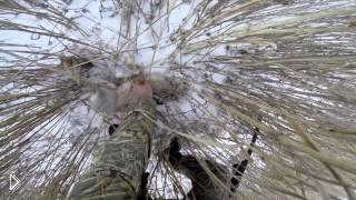 Смотреть онлайн Охота на зайца русака зимой с подхода по снегу