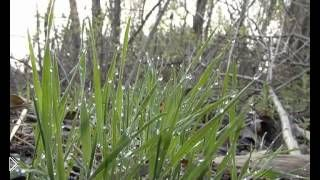Смотреть онлайн Ловля плотвы на удочку ранней весной