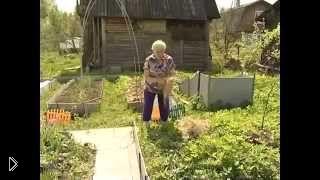 Смотреть онлайн Посадка и выращивание картофеля под соломой