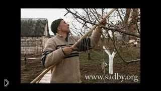 Смотреть онлайн Обрезка дерева молодой груши весной для начинающих