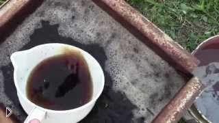 Смотреть онлайн Весеннее удобрение винограда куриным пометом