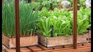 Смотреть онлайн Выращивание зелени в открытом грунте ранней весной