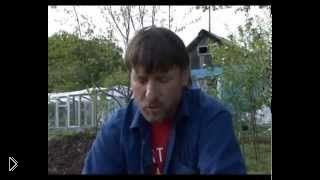 Смотреть онлайн Посадка перца и баклажанов в открытый грунт весной