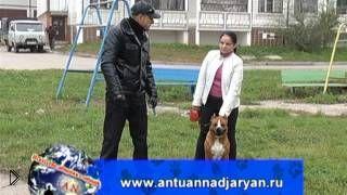 Смотреть онлайн Как подавить агрессию к людям у бойцовской собаки