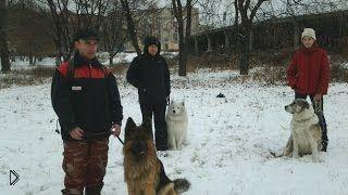 Смотреть онлайн Самостоятельная коррекция поведения у собаки
