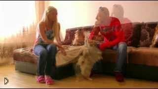 Смотреть онлайн Воспитание померанского шпица в домашних условиях