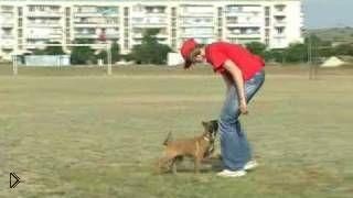 Смотреть онлайн Дрессировка собак на послушание