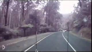 Смотреть онлайн Дерево чуть не упало на водителя, Австралия 29.12.2014