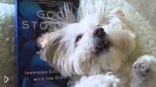 Смотреть онлайн Подборка: Животные чихают