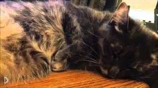 Смотреть онлайн Неадекватный кот, которому все по плечу