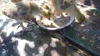 Смотреть онлайн Правильный уход за гусями
