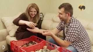 Смотреть онлайн Вакцинация цыплят в домашних условиях