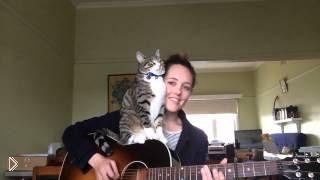 Смотреть онлайн Кот обожает игру на гитаре своей хозяйки