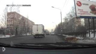 Смотреть онлайн Добрый водитель пропустил собаку на переходе