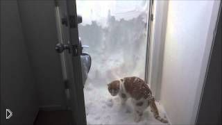 Смотреть онлайн Кот старательно копает снег своими лапками