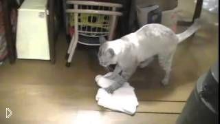 Смотреть онлайн Хозяйственный кот моет полы