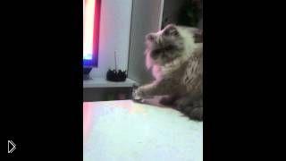 Смотреть онлайн Наглый кот хулиганит и не слушает хозяйку