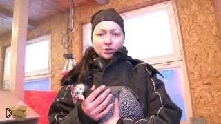 Уход и разведение цесарок в приусадебном хозяйстве - Видео онлайн