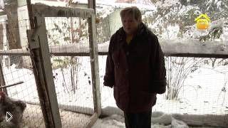 Смотреть онлайн Обустройство курятника для домашних кур своими руками